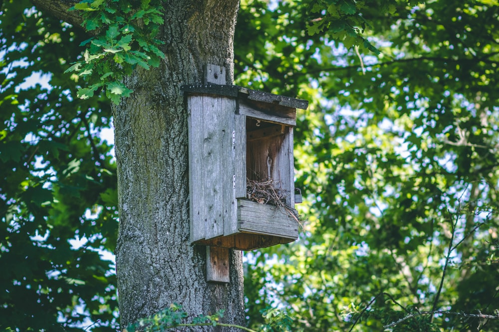 birdhouse on tree during day