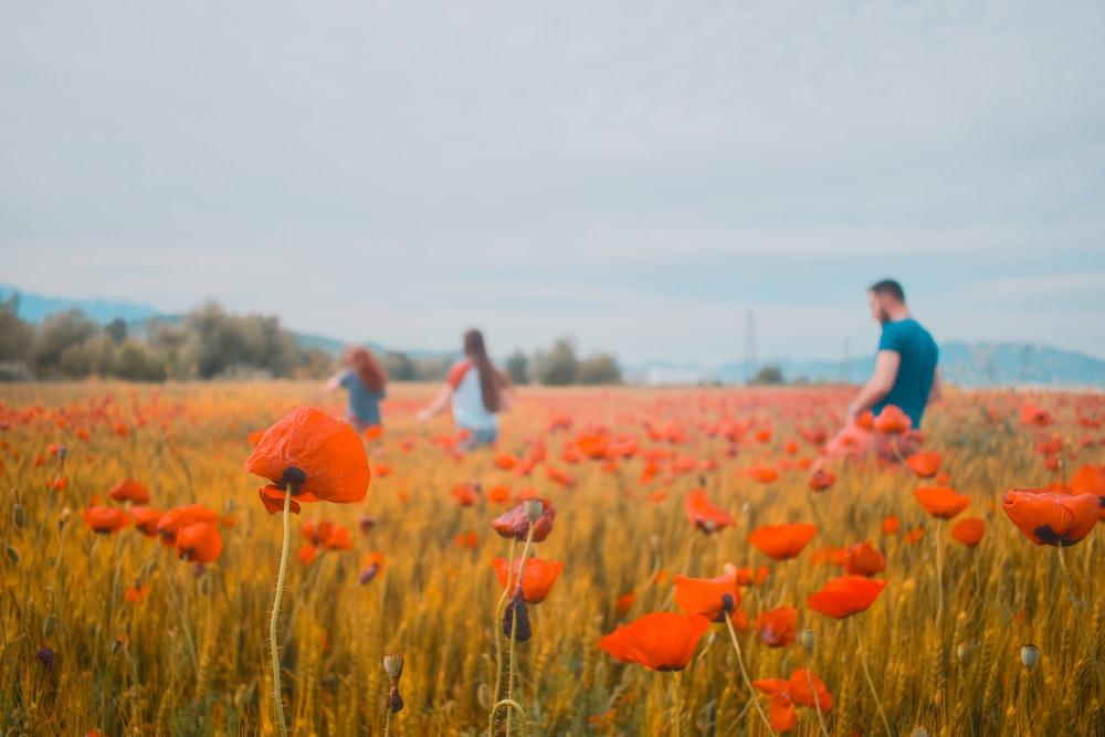 people walking on orange petaled flower field