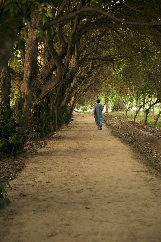 person walking in pathway during daytime