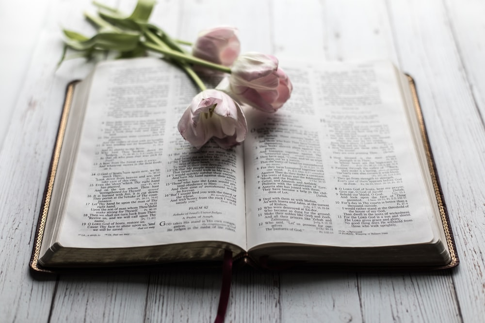 pink petaled flowers on open book