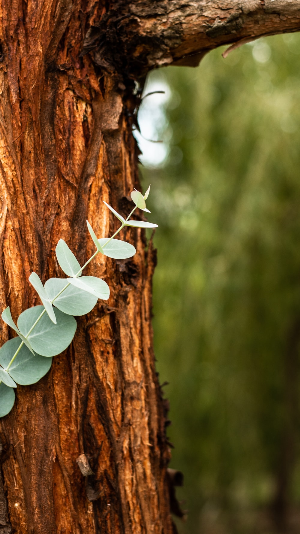selective focus photography of green-leafed plant on brown tree trunk