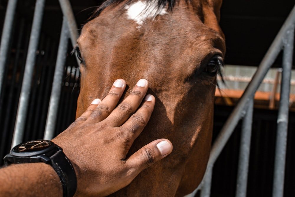person touching brown horse