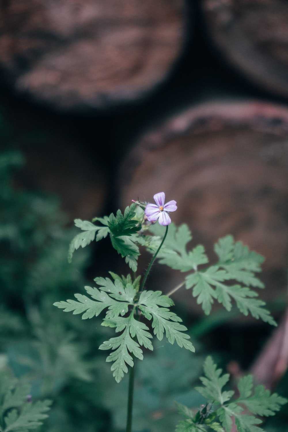 selective focus photography of white-petaled flower