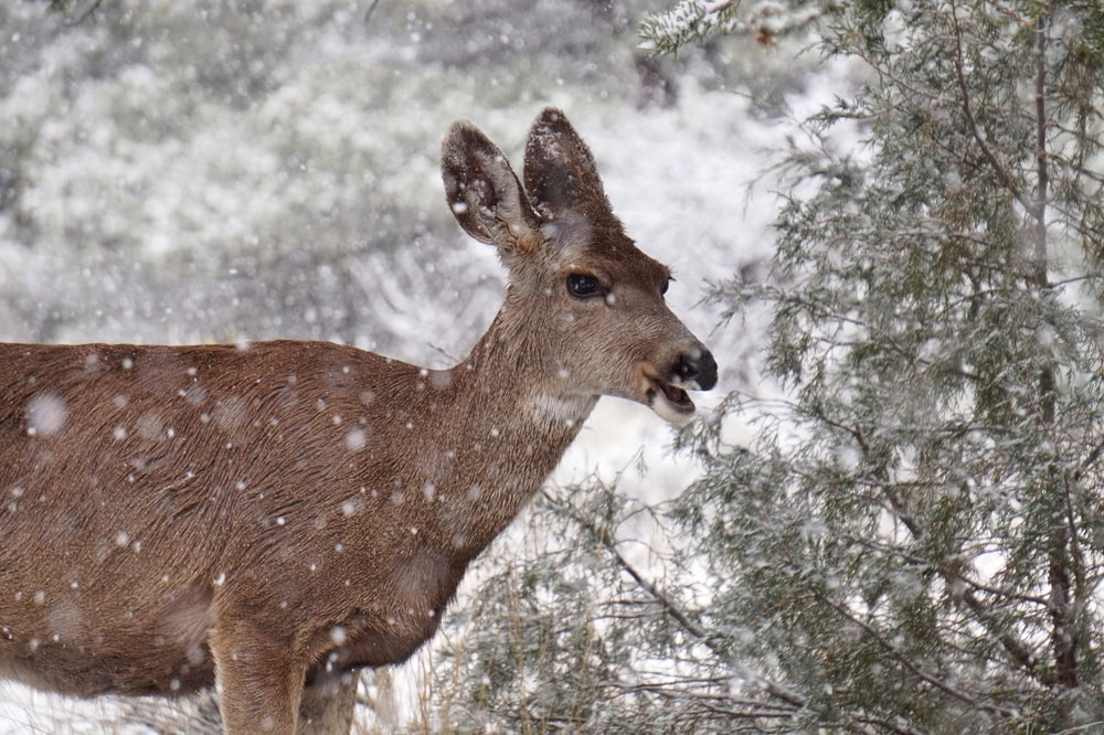 photography of brown deer beside pine tree during daytime