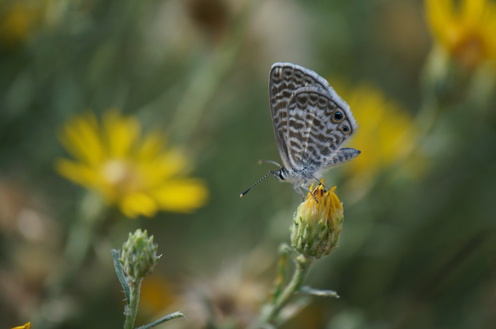 white and brown butterfly perching on yellow flower