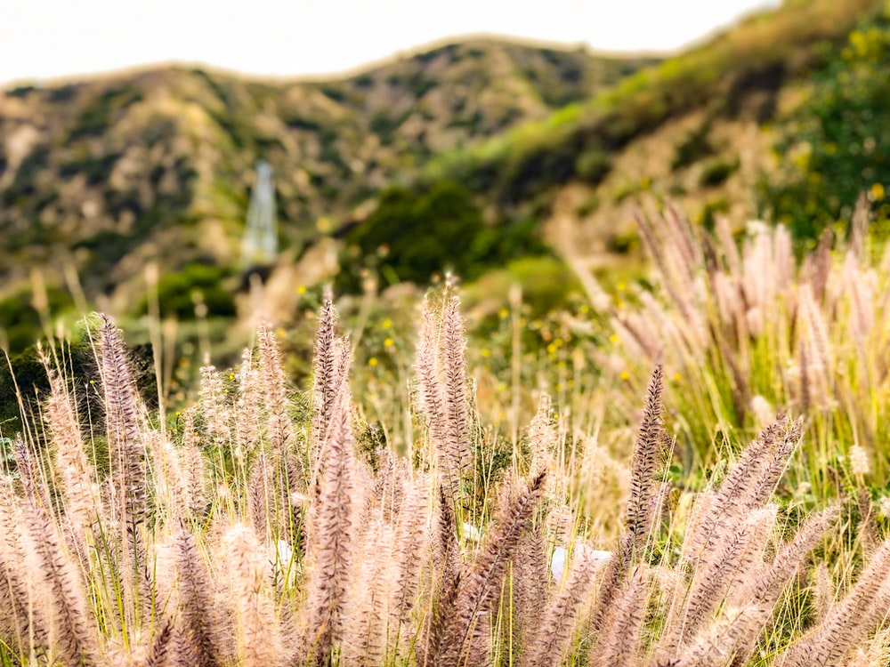 selective focus photography of brown grass during daytime