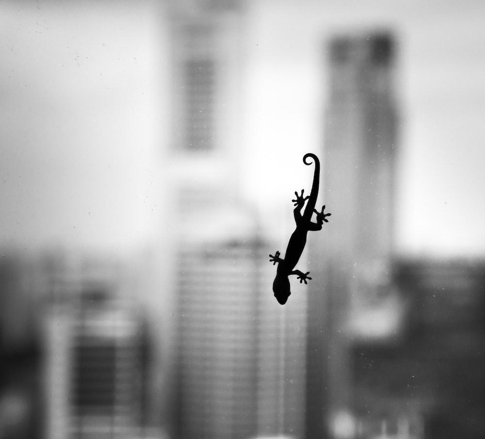 silhouette of house lizard