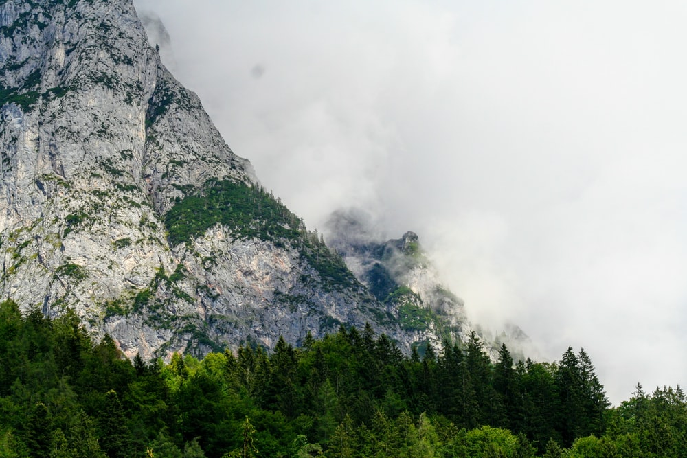 green pine tree and mountain scenery