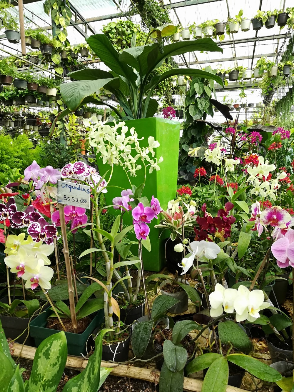 orchids inside greenhouse