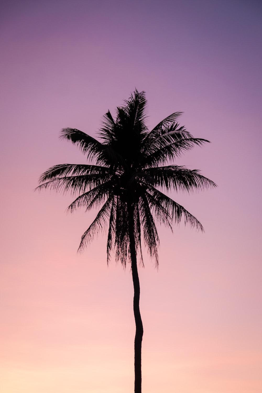 silhouette of palm tree