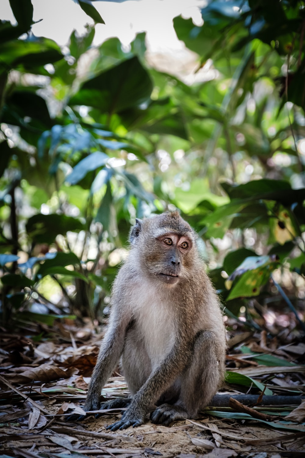 grey monkey on ground