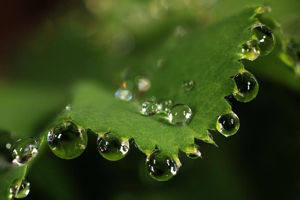 water dews on leaf
