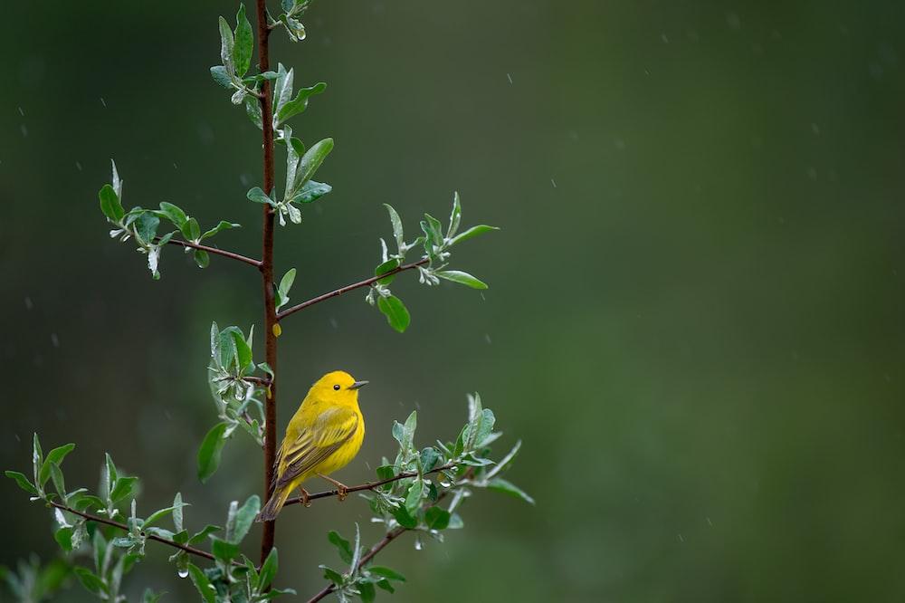yellow bird on tree
