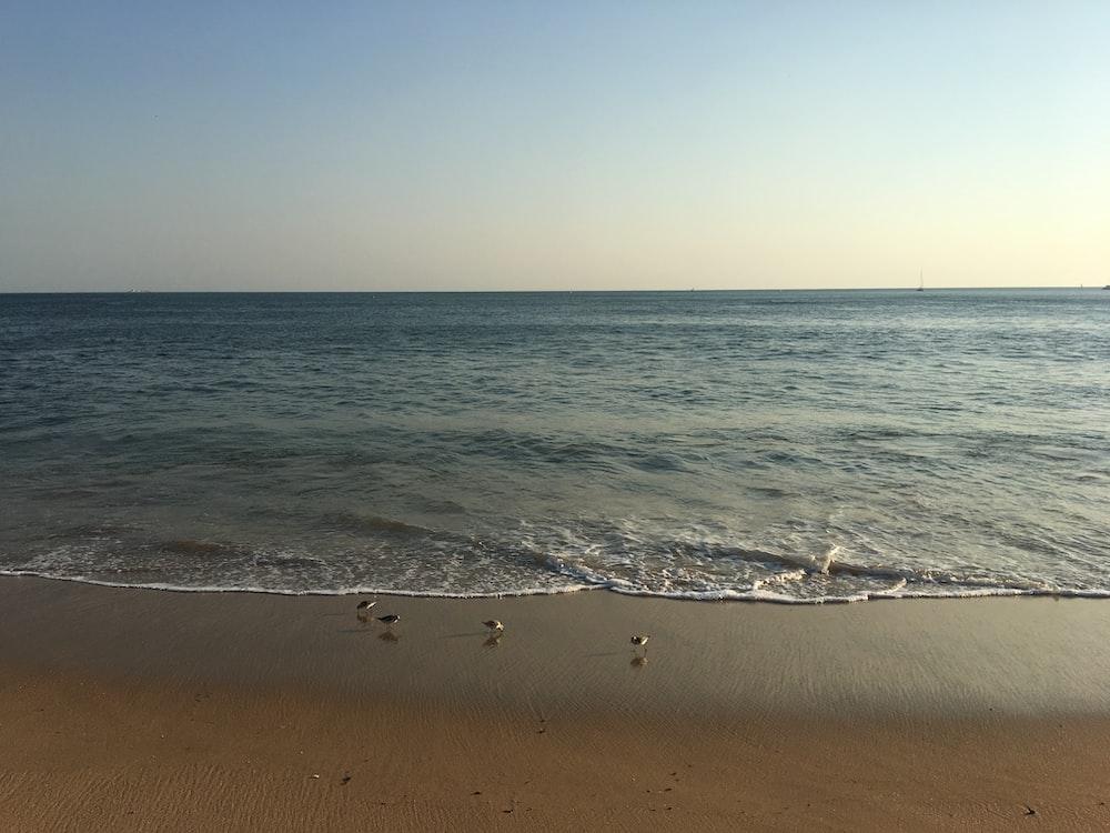 four birds in seashore