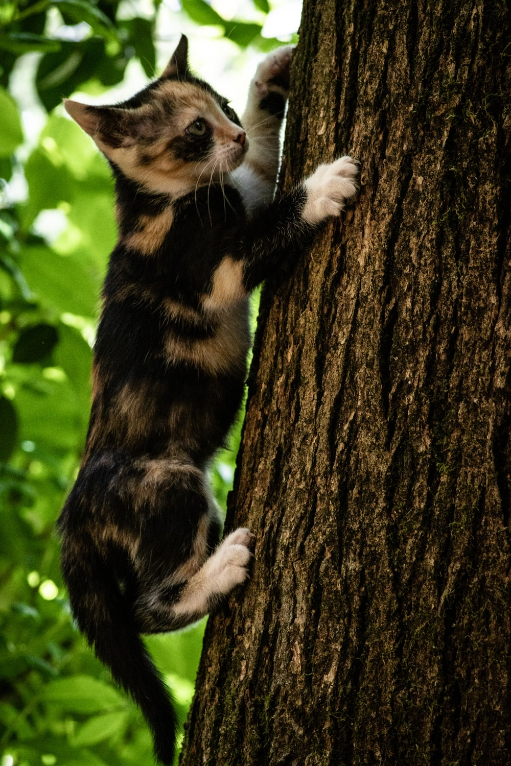 black and brown cat on tree trunk during daytim e