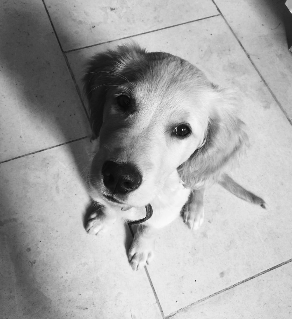 white dog sitting on floor