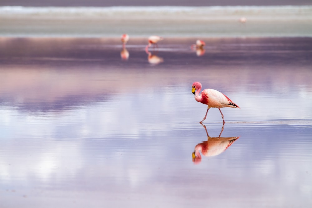 white and pink herons in beach