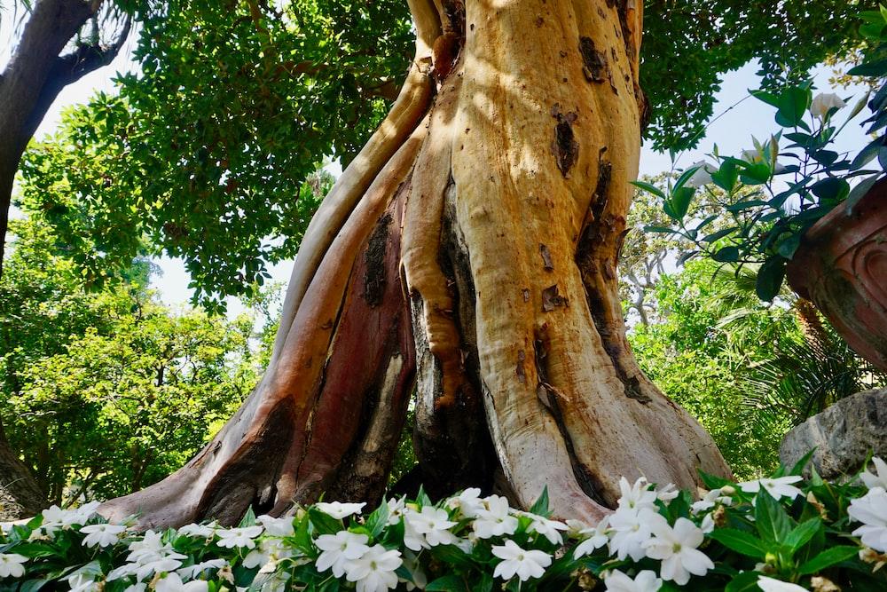 brown tree bark