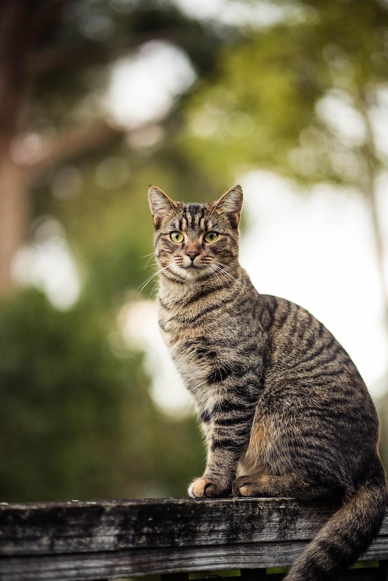 【動物傳心】想學寵物溝通,卻選擇了ISAC 動物傳心的原因
