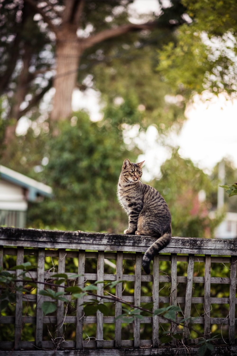 brown cat sitting on fence