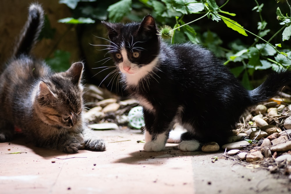 two kittens playing beside plant
