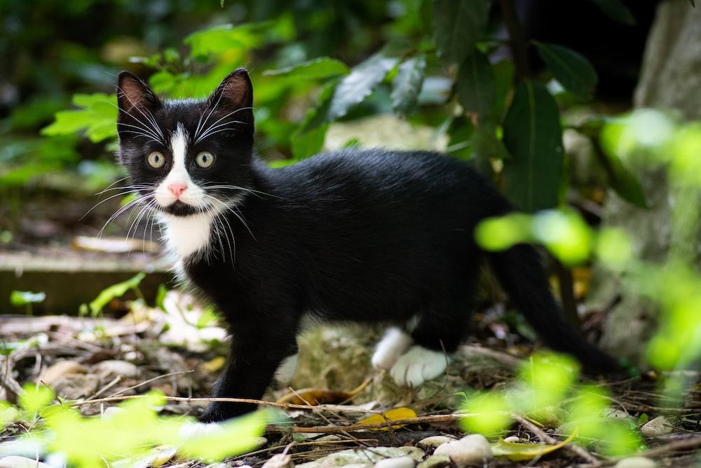 tuxedo kitten beside leafed plant