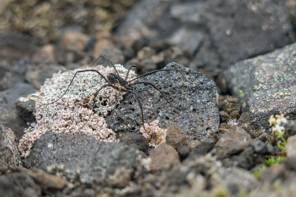spider on rock