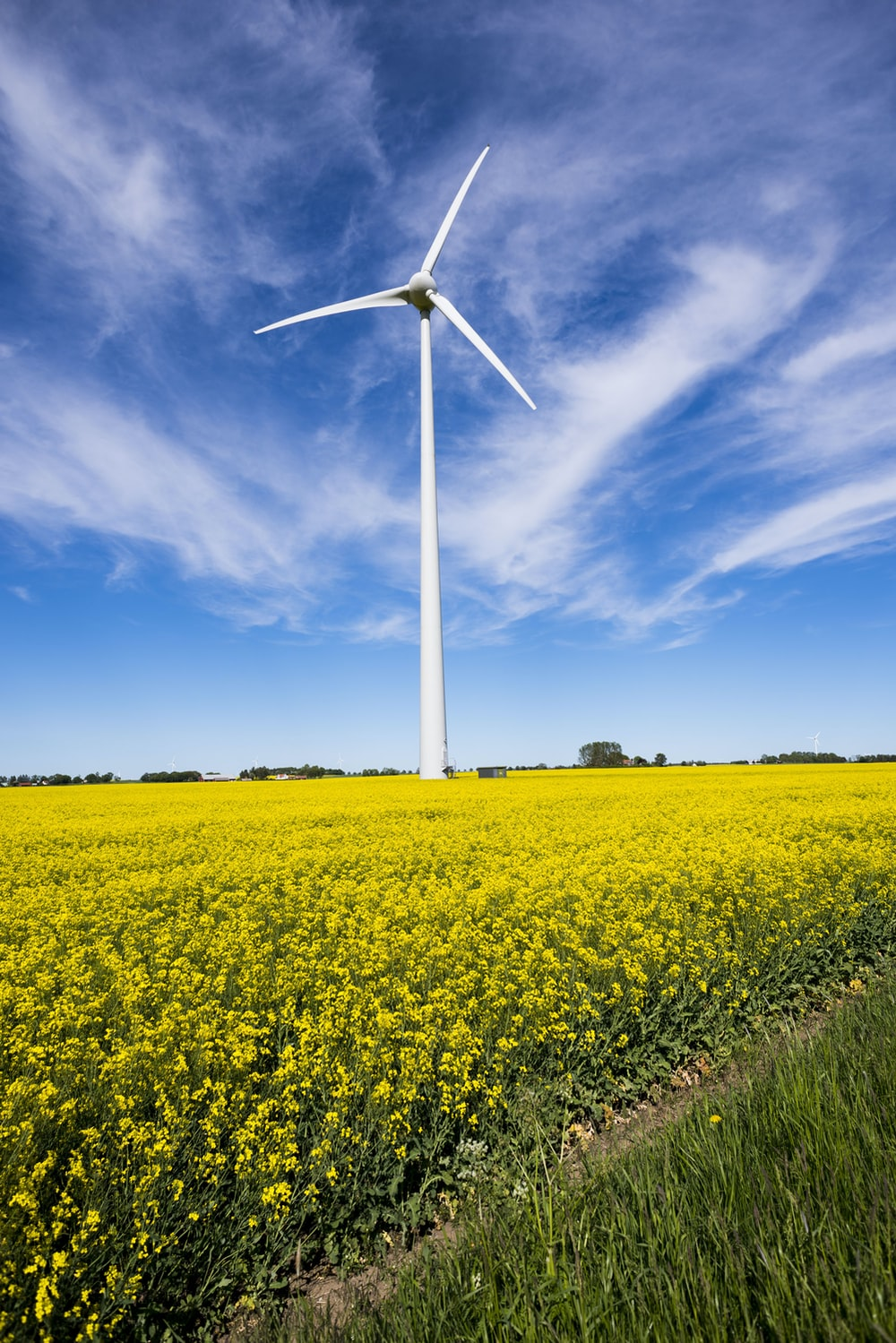 white windmill on yellow-petaled flower field during daytime