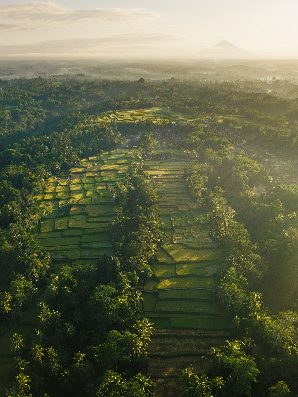 aerial view of ricefield