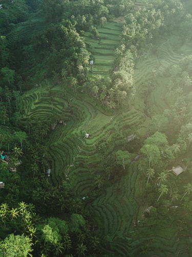Ubud, Places to Visit in Bali in April