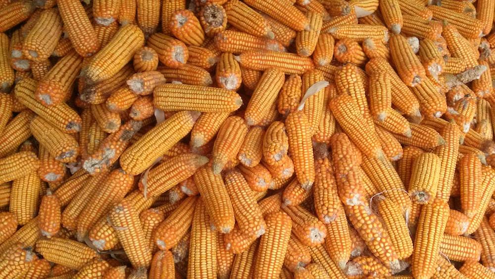 pile of corns