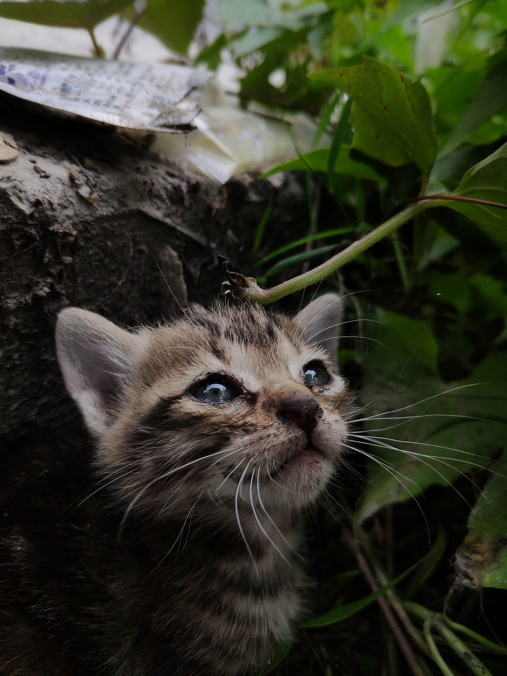 brown and gray kitten