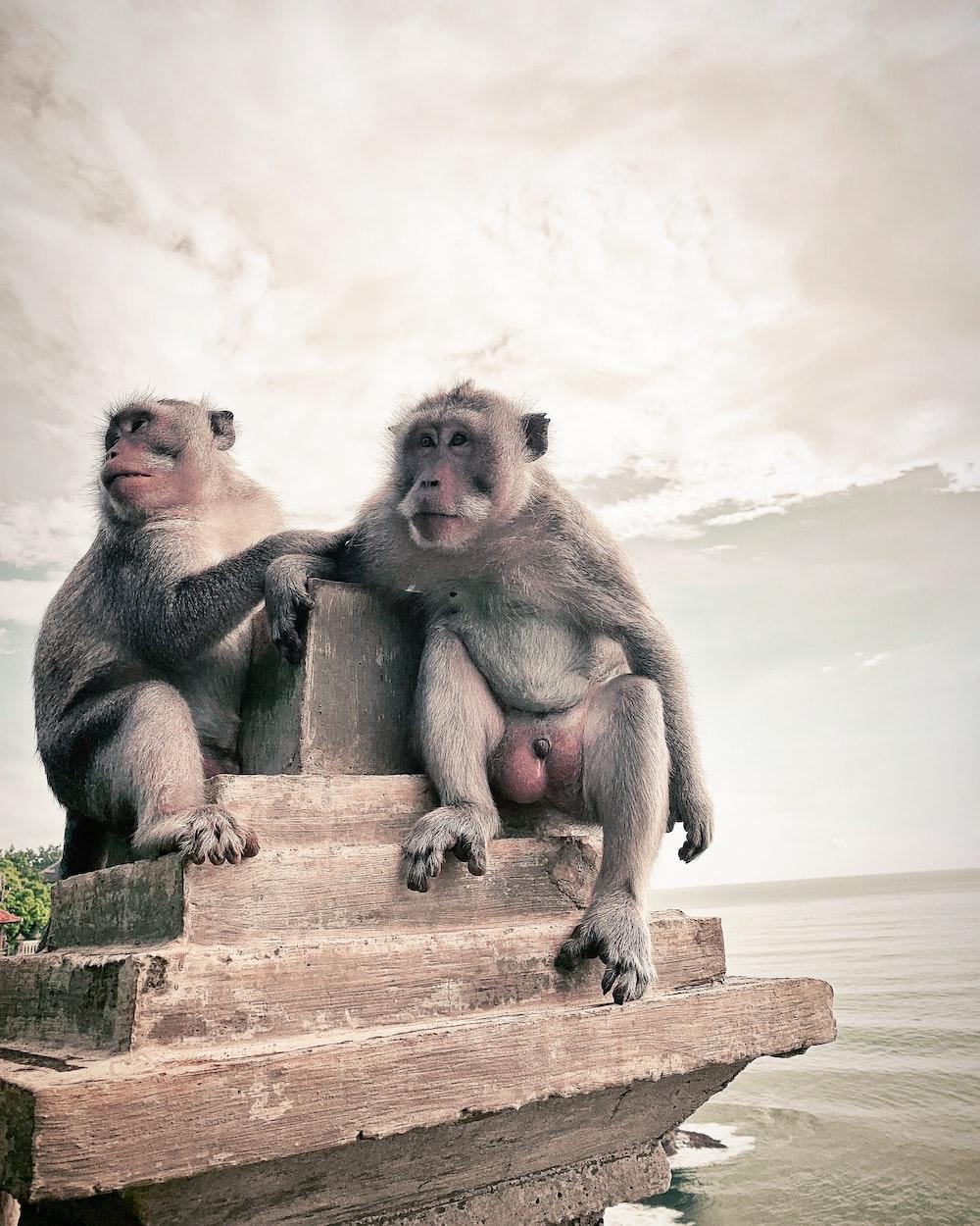 two gray monkeys sitting on brown concrete rack