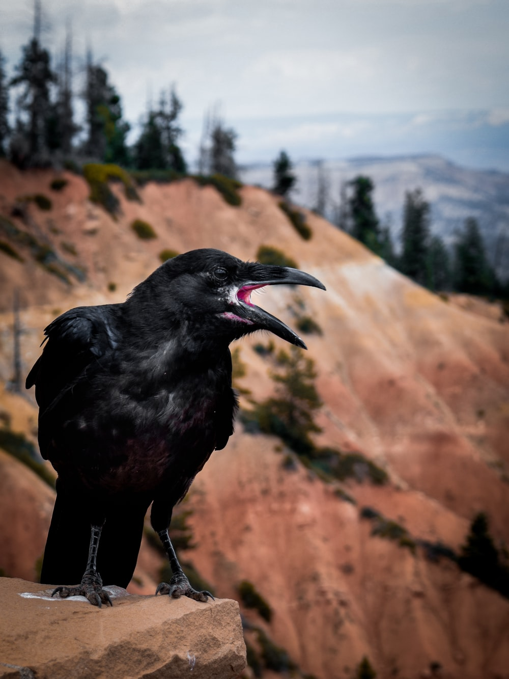 black crow on rock formation during daytime