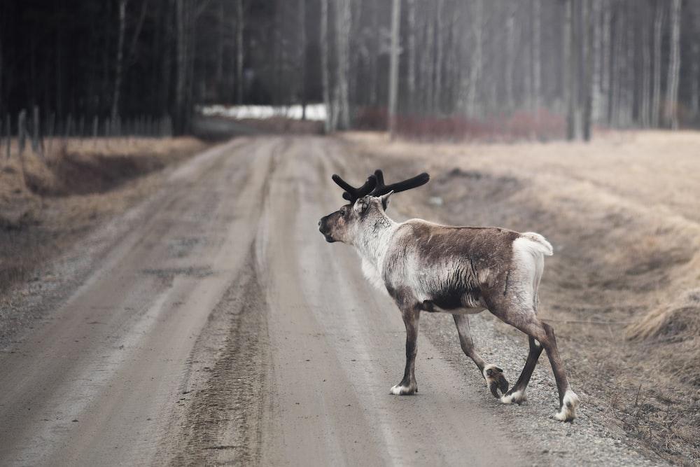 moose on ground