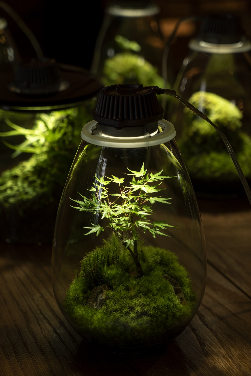 green plant in clear glass terrarium with lights