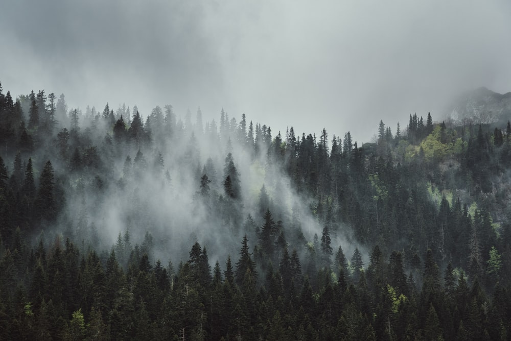 smoke coming from forest