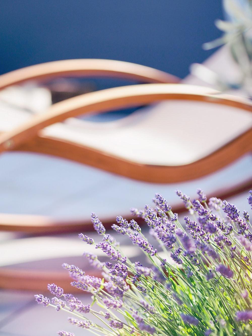 purple flowered plants