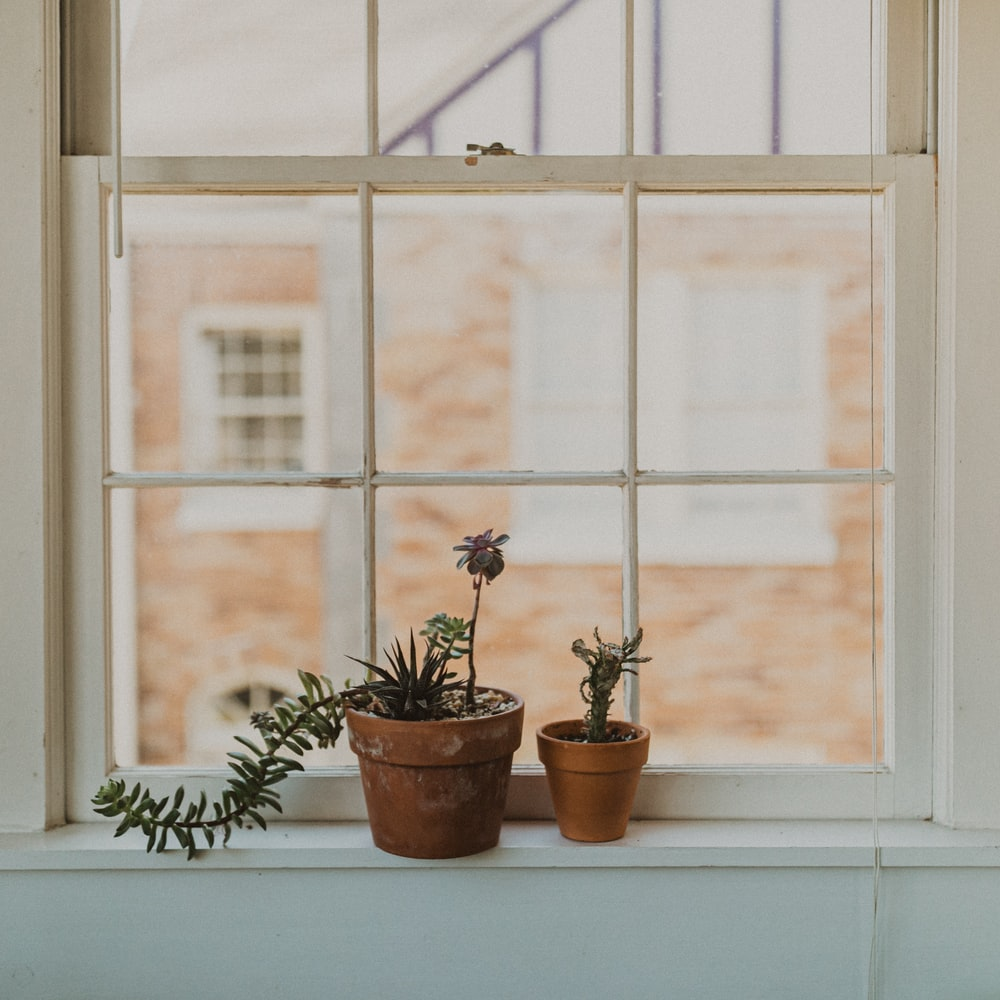 two potted plants on window sill