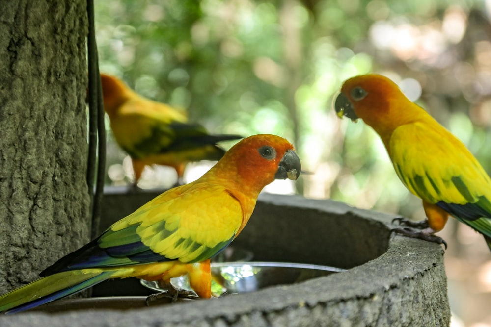 shallow focus photography of three yellow-and-green birds