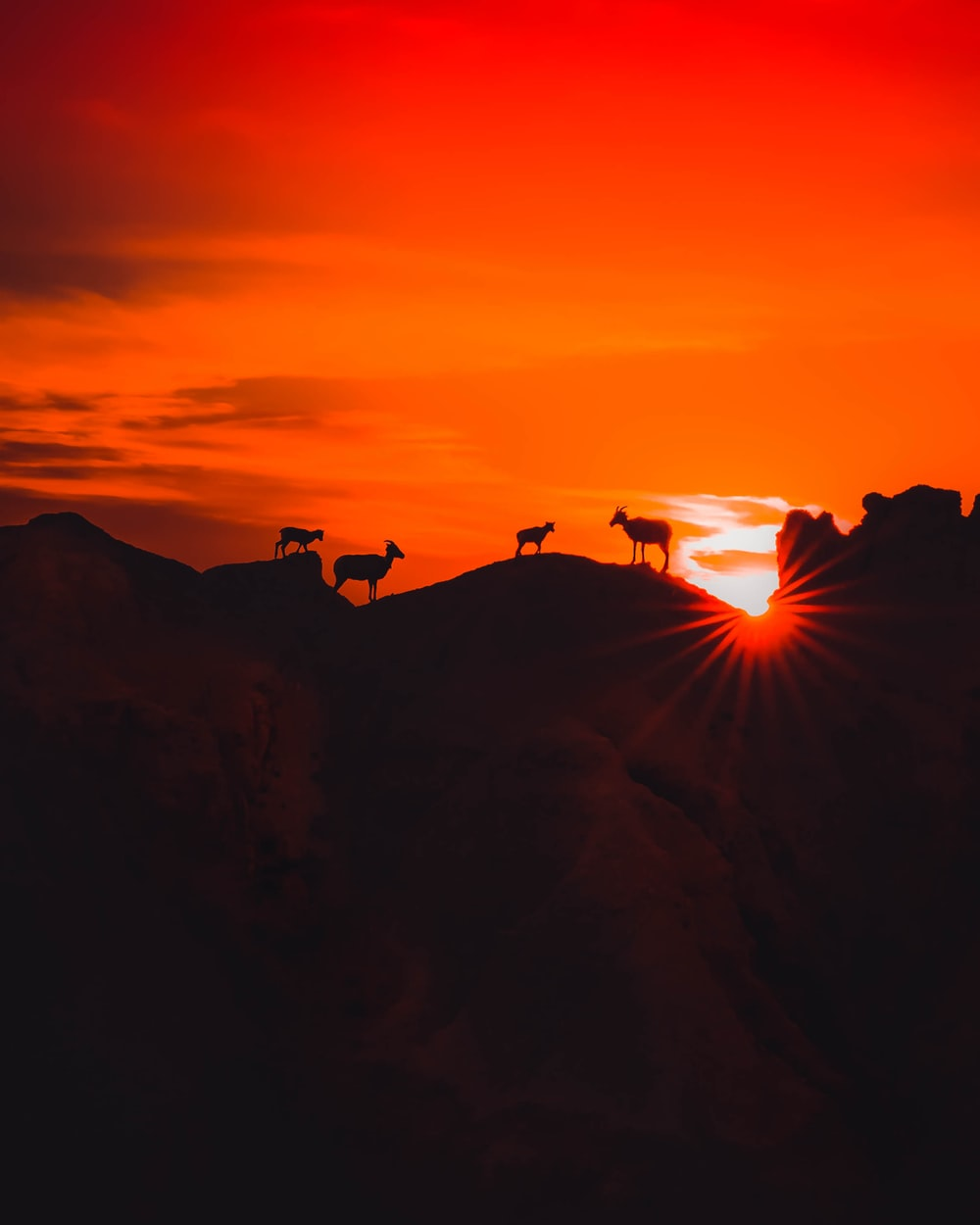 four animals standing on high ground during golden hour