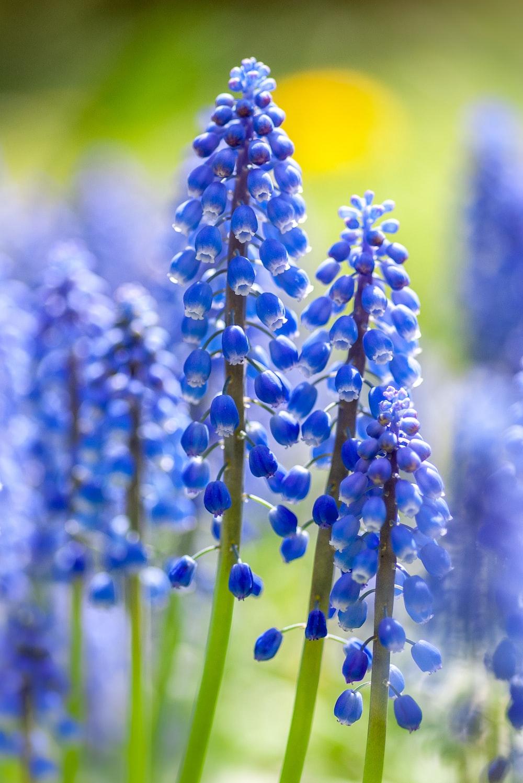 blue flowers close-up photo