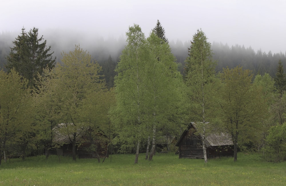 gray cabin near trees during daytime