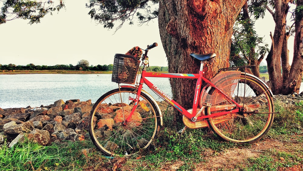 red rigid bicycle beside tree
