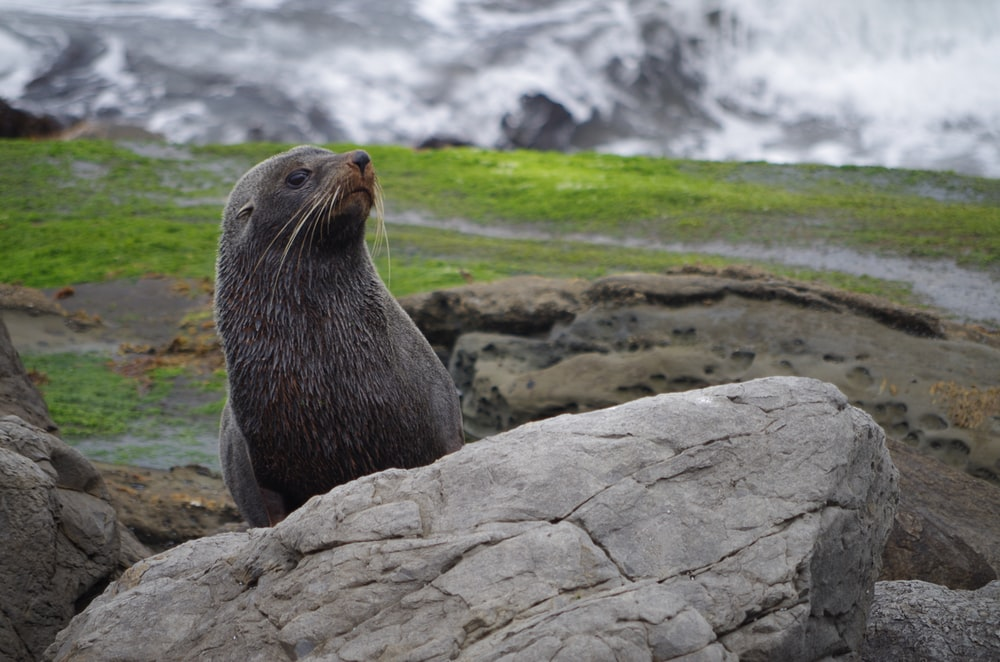 selective focus photography of sea lion