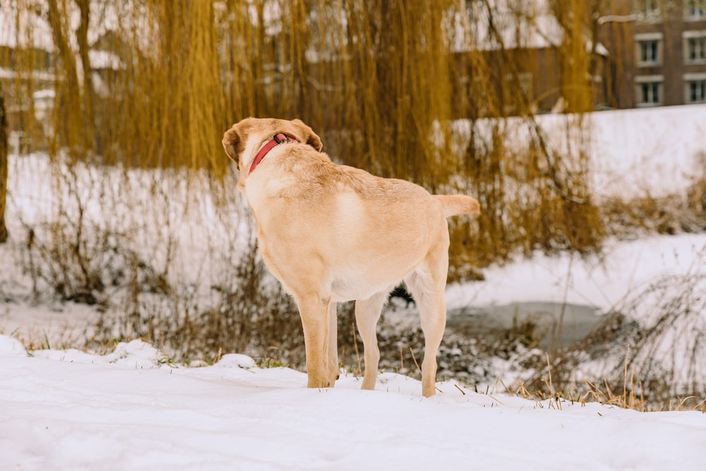 dog standing on snow