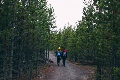people walking on pathway between trees yellowstone zoom background