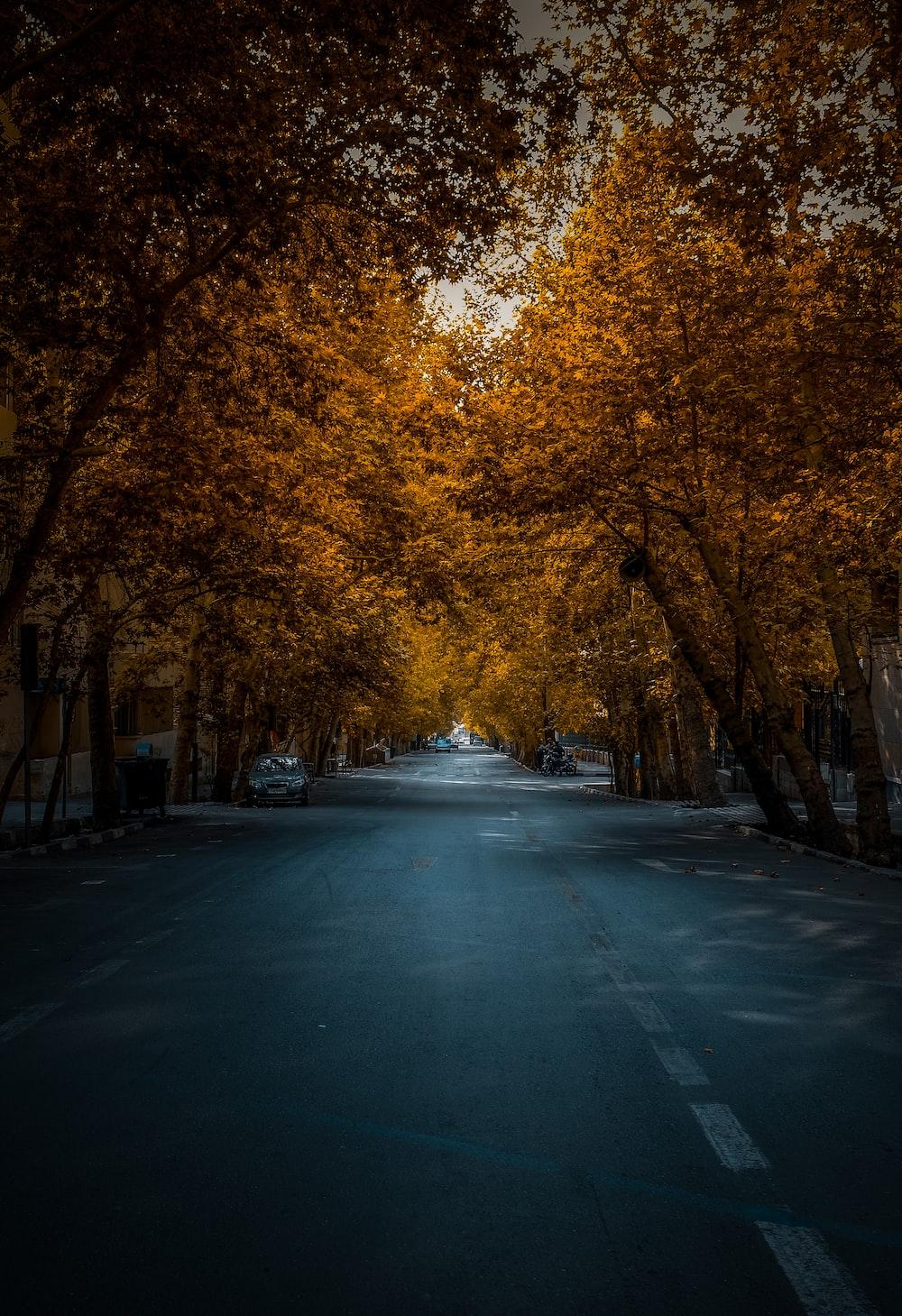 empty road between maple trees