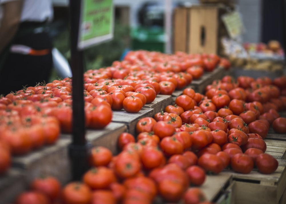 rows of tomatoes