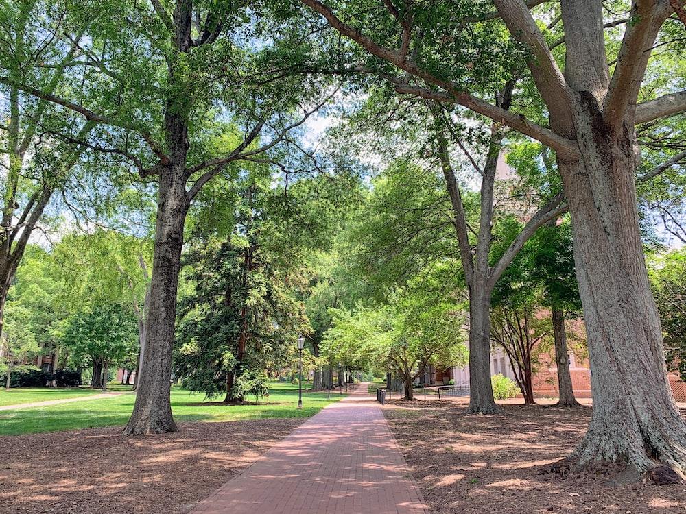 green trees besides concrete pathways